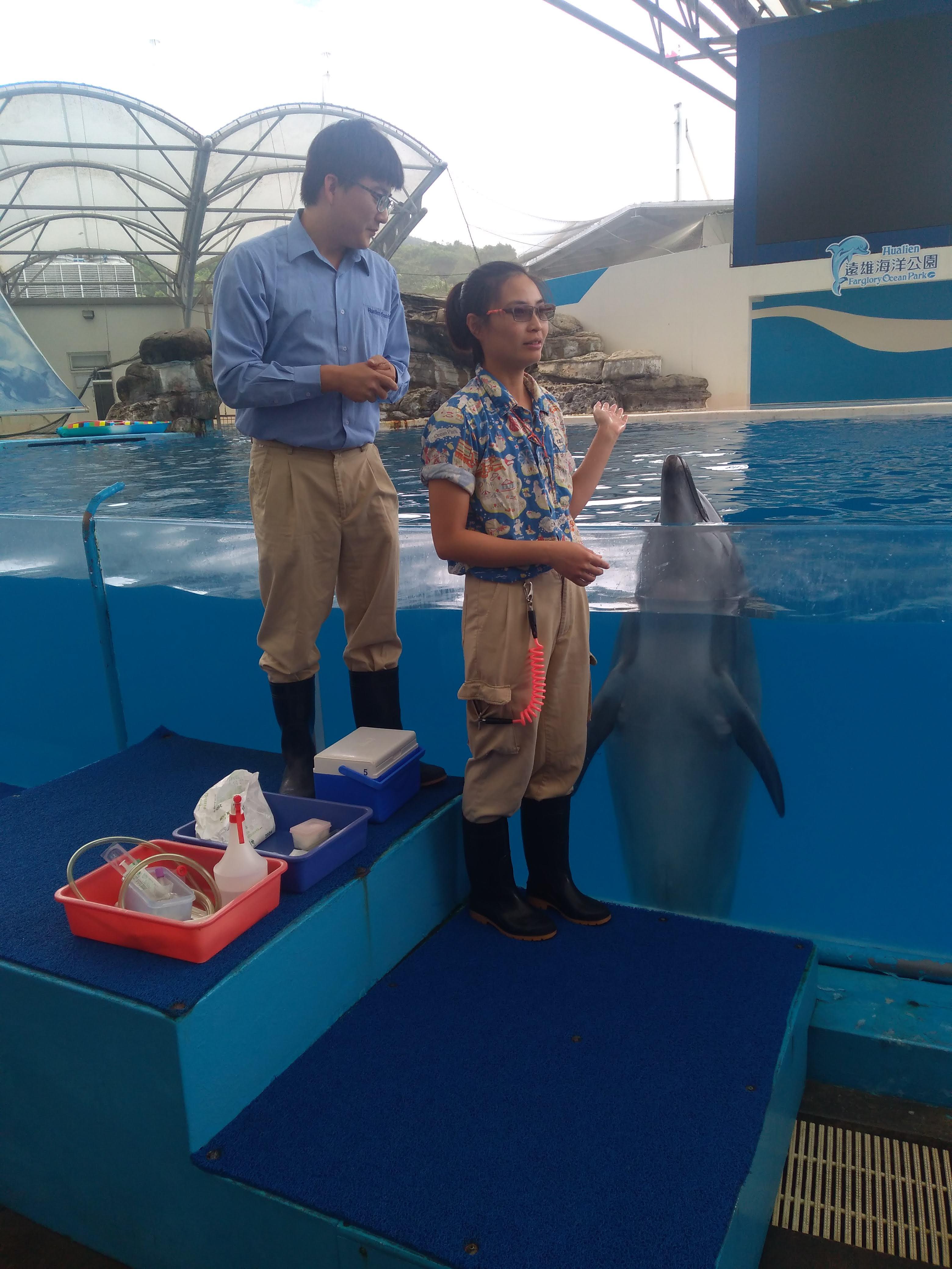 遠雄海洋公園獸醫師及訓練師展示鯨豚醫療健檢採樣.jpg